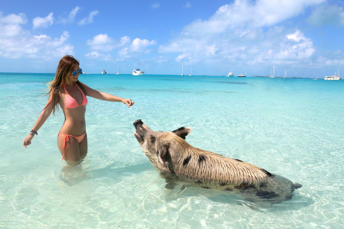 swimmingpigs. mareenschauder